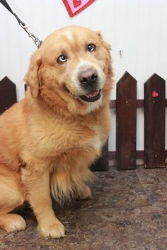 Ron the dog just got adopted from a local shelter and he is the most adorable thing ever!   http://ift.tt/2lqw2rA via /r/dogpictures http://ift.tt/2l1p0J1  #lovabledogsaroundtheworld