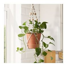 IKEA - ANVÄNDBAR, Hanging plant holder, Handmade by a skilled craftsperson.Keeping plants indoor gives better air quality at home, as plants add oxygen and moisture. Potted Plants, Indoor Plants, Porch Plants, Tomato Plants, Shade Plants, Hanging Planters, Planter Pots, Ikea Planters, Diy Hanging