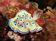 Nudibranch - Commonly Called Sea Slugs. Glowing with awesome colors!