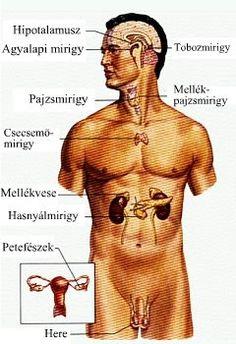 az endokrin rendszer rákja)