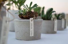 Euphorbia japonica // Concrete Plant Pots, Cacti, Potted Plants, Outdoor Gardens, Outdoor Living, Pineapple, Planter Pots, Succulents, Urban