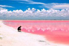 """Las coloradas, Yucatán. """"Un mar rosa"""" México."""