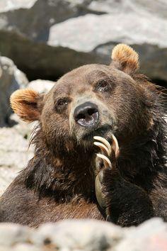 Nature Animals, Animals And Pets, Baby Animals, Funny Animals, Cute Animals, Baby Pandas, Wild Animals, Smart Animals, Regard Animal