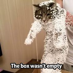 ** the box wasn't empty