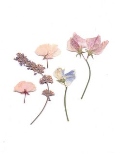 friday inspirations | beautiful pastel pressed flowers