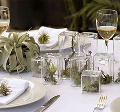 love the terrariums with the air plants for wedding centerpieces