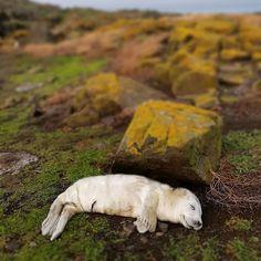 Hillwalk Tours (@hillwalktours) • Instagram photos and videos Fife Coastal Path, Polar Bear, Paths, Tours, Photo And Video, Videos, Animals, Instagram, Animales