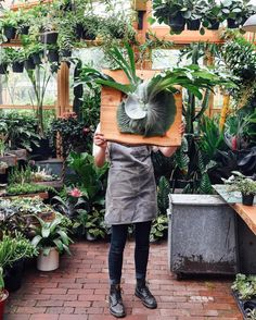 """Plant people! Behold this mammoth Platycerium grande (""""Moosehorn"""" fern). We are in awe."""