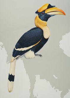 The great hornbill.