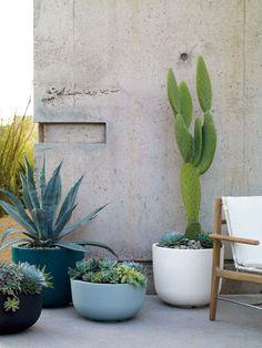 quel pot choisir cactus succulentes pots modernes