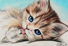 Cat Art, Pet Birds, Cats, Animals, Acrylic Painting Animals, Gatos, Animales, Animaux, Animal