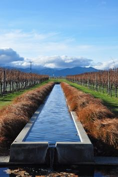 Fountain, Villa Maria Winery, Marlborough, New Zealand