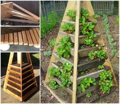 Vertical Garden Pyramid Planter. 20140803