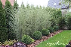 Beautiful ideas for landscaping with ornamental grasses used as an informal grass hedge, mass planted in the garden, or mixed with other shrubs and plants. #gardenshrubsborder