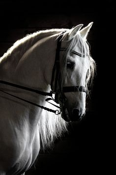 White Beauty In The Night Photograph by Wes and Dotty Weber