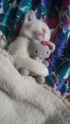 """cutekittensarefun: """"2 yrs later and he still sleeps with his toys. """""""