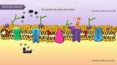Transporte a través de membrana celular