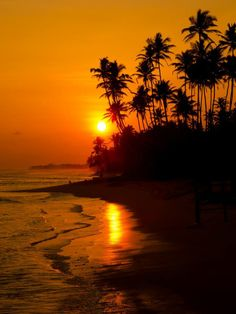 Exotic paradise island of Sri Lanka. - Explore the World with Travel Nerd Nici, one Country at a Time. http://TravelNerdNici.com