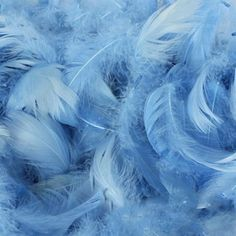 Pack of Baby Blue Feathers (150)