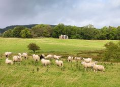 Owners: George and Julie Nicolson, who also own the sheep farm on which it sits Location: Dumfries & Galloway, Scotland Year built: 2012 Designer: Sam Booth, Echo Living Size: 1 bedroom, 1 bathroom Off Grid Tiny House, Small Tiny House, Tiny House Swoon, Small Houses, Eco Pods, Galloway Scotland, Bothy, Farm Cottage, Cabin Kits