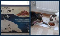 Minkalta tuli kissanruokaa ja hyvin maittoi! :) (Päivän pikaiset, maaliskuu 2013)