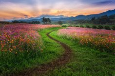 Into The Sunset Digital Backdrop, Digital Backdrop / Background for Photoshop,  High Resolution, Instant Download.