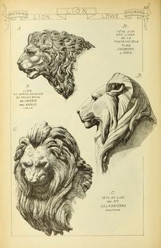 1915 - Vol. 8 - Materials & documents of architecture and sculpture : A… Drawing Sketches, Art Drawings, Sculptures, Lion Sculpture, Fu Dog, Illustration Art, Illustrations, Grafik Design, Architecture Art