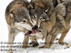 Dale: ✔ Me Gusta ✔ Compartir ✔ Comenta :)  Dale like y comparte : ► WWW.SEPARADASYSEPARADOS.CL ◄