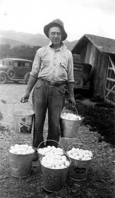 This is how I remember collecting eggs with my grandma, Minnie Pederson, back in South Dakota; in galvanized buckets. She had LOTS of chickens!