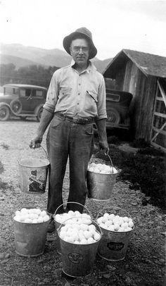 Fresh Eggs...1925