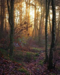 Enchanted woods The post Enchanted woods autumn scenery appeared first on Trendy. Forest Path, Magic Forest, Beautiful World, Beautiful Places, Beautiful Pictures, All Nature, Nature Images, Landscape Photography, Nature Photography