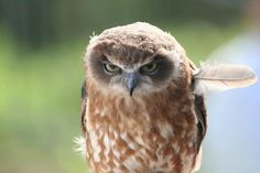 This owl is judging you :D