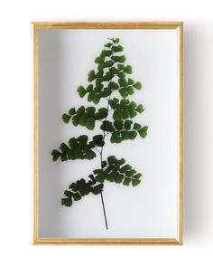 """Shop """"Fern II"""" Shadow Box Display from John-Richard Collection at Horchow, where you'll find new lower shipping on hundreds of home furnishings and gifts. Future Trends, White Acrylics, Ferns, Hanging Art, Shadow Box, Decorative Accessories, Home Furnishings, Luxury Homes, 3 D"""