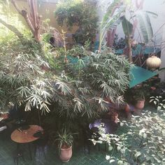 #marrakech lunch at le Jardin