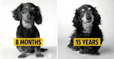 These Touching Pictures Of Dogs Aging Will Melt Your Heart Away