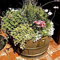 DIY: Old Wine Barrel Doubles as a Pretty Planter