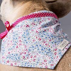 We love your neck... #romantic Flowers #scarf by O Clube da Tula. Photo: @whom.creativestudio #scarves for #dogs #scarf for #dogstagram #dogshow #dogslover #dogs #fashion #fashionista #bandana #galgo #galgos #greyhound #greyhoundlove #pitbull #labrador #bulldog #bulldogfrances #bulldogingles #bulldogs #bulldoglife #bulldoglove #bulldogram #bulldogpuppy #bulldogsofig