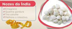 Sementes de Nozes da Índia no atacado em promoção para revender no varejo https://comprarprodutosnaturais.wordpress.com/2015/04/10/como-comprar-nozes-da-india-no-atacado-e-revender/