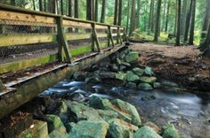 Wood Bridge In Lynn Valley Forest, North Vancouver, BC