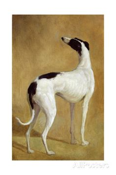 Study of a Greyhound Giclee Print by Jacques-Laurent Agasse at AllPosters.com
