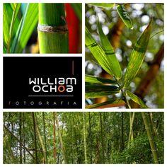 https://www.facebook.com/WilliamOchoaFotografia