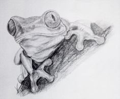 frog pencil drawing by nelutuinfo.deviantart.com on @deviantART
