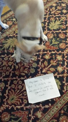 Dog Shame | My name is Bruce and I didn't like Mommy's wedding...