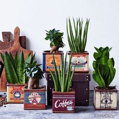 Coffee Time- Succulent plant in a quirky coffee tin- Ideal gift Cactus E Suculentas, Small Courtyard Gardens, Bloom Where Youre Planted, Plants Delivered, Small Cactus, Succulent Terrarium, Terrariums, Cool Gifts For Women, Vintage Tins