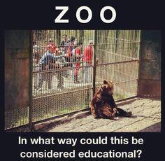 so cruel, poor, beautiful animal.