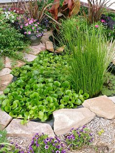 Keep a Pond Simple Large Water Features, Outdoor Water Features, Water Features In The Garden, Pond Plants, Water Plants, Water Garden, Growing Plants, Ponds Backyard, Backyard Ideas