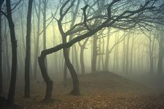 Beauty in the mist: 30  mysterious and intriguing photos of fog