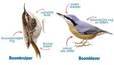 Bird Identification, Birds In The Sky, Kinds Of Birds, Vintage Birds, Bird Prints, Bird Watching, Bird Feathers, Beautiful Birds, Animals
