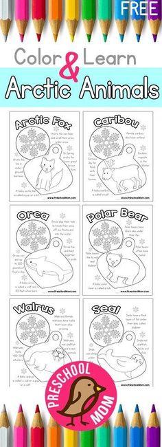 Free Arctic Animals Color and Learn! http://preschoolmom.com/preschool-printables/arctic-animal-preschool-printables/