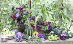A wonderful palette of colors for my garden.